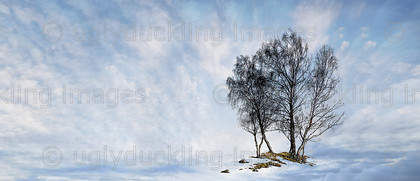 Winter Grove Panorama 