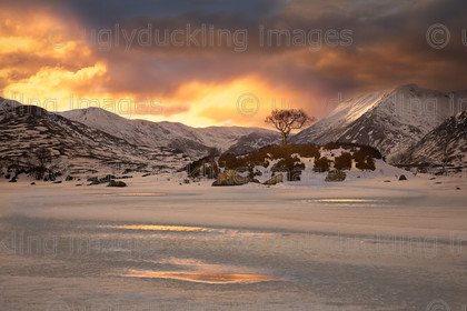 fire & ice 